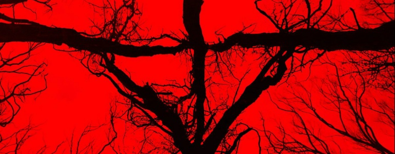 The Secret Of THE WOODS? It's A BLAIR WITCH Movie
